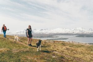 Two women hiking with two dogs